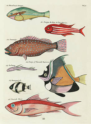 Surrealism Royalty-Free and Rights-Managed Images - Vintage, Whimsical Fish and Marine Life Illustration by Louis Renard - Toctasse Moor, Joosje, Goujon by Louis Renard