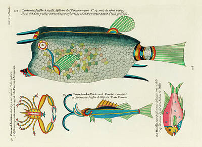 Surrealism Royalty-Free and Rights-Managed Images - Vintage, Whimsical Fish and Marine Life Illustration by Louis Renard - Tomtombo, Benissje, Cancre by Louis Renard