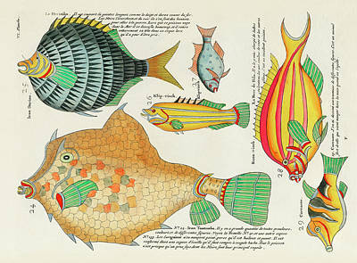 Comic Character Paintings - Vintage, Whimsical Fish and Marine Life Illustration by Louis Renard - Tomtombo, Doriou, Rose Fish by Louis Renard