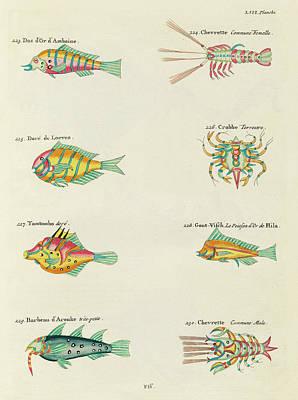 Surrealism Digital Art - Vintage, Whimsical Fish and Marine Life Illustration by Louis Renard - Tomtombo, Shrimp, Crab,  by Louis Renard