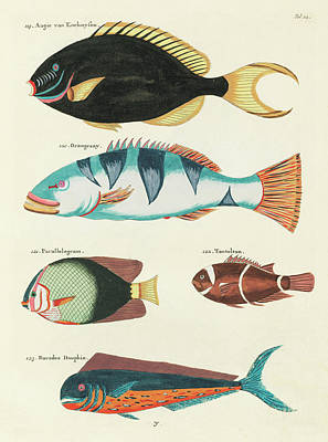 Surrealism Royalty-Free and Rights-Managed Images - Vintage, Whimsical Fish and Marine Life Illustration by Louis Renard - Tontelton, Dorado Fish by Louis Renard