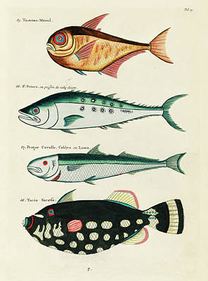 Surrealism Digital Art - Vintage, Whimsical Fish and Marine Life Illustration by Louis Renard - Toutetou Mamel, Horse Fish by Louis Renard