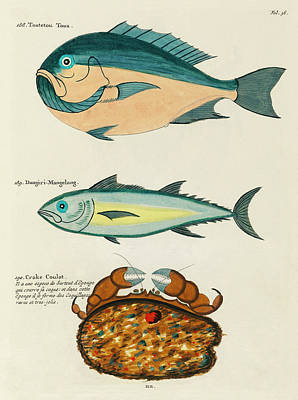 Surrealism Royalty-Free and Rights-Managed Images - Vintage, Whimsical Fish and Marine Life Illustration by Louis Renard - Toutetou Toua, Crake Coulat by Louis Renard