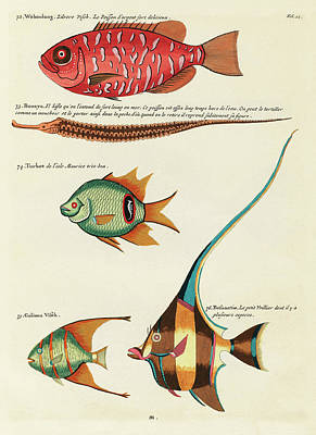 Surrealism Royalty-Free and Rights-Managed Images - Vintage, Whimsical Fish and Marine Life Illustration by Louis Renard - Waboulang, Bouaya, Turbot by Louis Renard
