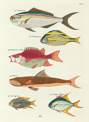 Surrealism Royalty-Free and Rights-Managed Images - Vintage, Whimsical Fish and Marine Life Illustration by Louis Renard - Wackum, Stompneus, Rover by Louis Renard