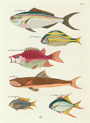 Surrealism Digital Art - Vintage, Whimsical Fish and Marine Life Illustration by Louis Renard - Wackum, Stompneus, Rover by Louis Renard