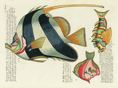 Surrealism Digital Art - Vintage, Whimsical Fish and Marine Life Illustration by Louis Renard - The Great Table Fish, Suangi by Studio Grafiikka