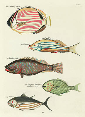 Surrealism Royalty Free Images - Vintage Tropical Fish and Marine Life Illustration by L Renard - Douwing Baron, Parrot Fish, Marack Royalty-Free Image by Studio Grafiikka