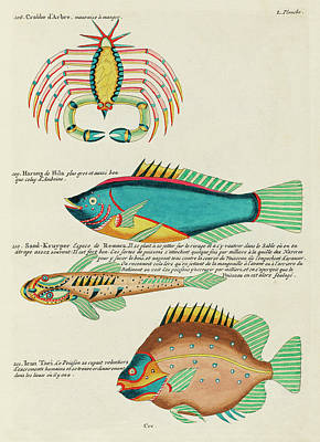 Royalty-Free and Rights-Managed Images - Vintage, Whimsical Fish and Marine Life Illustration by Louis Renard - Crab, Sand Creeper, Ican Taci by Studio Grafiikka