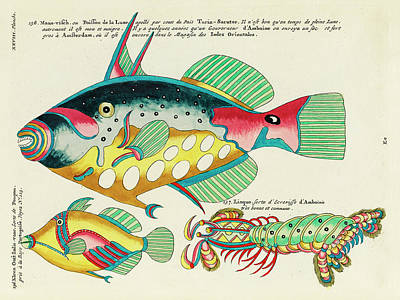 Animals Digital Art - Vintage, Whimsical Fish and Marine Life Illustration by Louis Renard - Crayfish from Amboine, Poupou by Studio Grafiikka