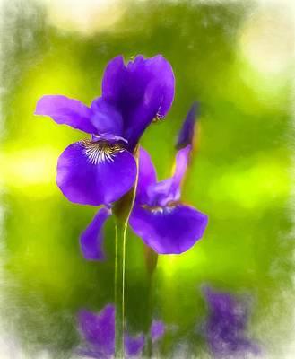 Mixed Media - Violet Iris by Susan Rydberg