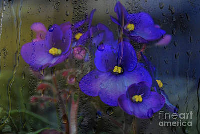 Photograph - Violets In A Window by Diana Mary Sharpton