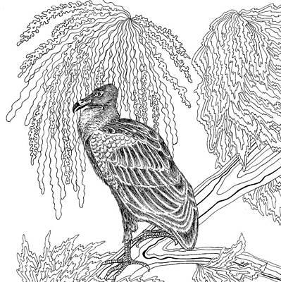 Animals Drawings - Vulture by Jennifer Wheatley Wolf