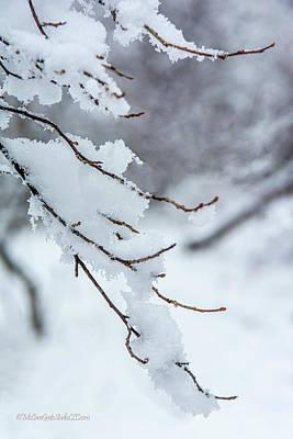 Photograph - Walk into Winter by LeeAnn McLaneGoetz McLaneGoetzStudioLLCcom