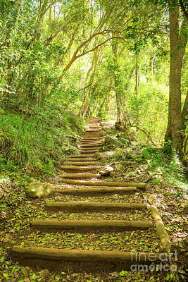 Royalty-Free and Rights-Managed Images - Walking Trail Stairway on Table Mountain by THP Creative