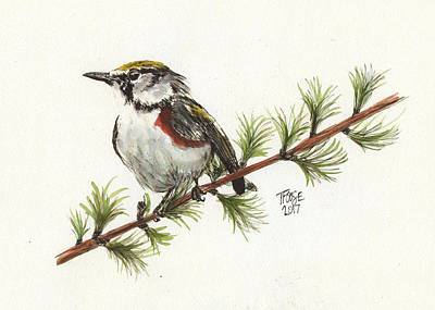 Rose - Warbler on a Pine in Watercolor by Taphath Foose