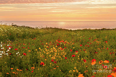 Classic Christmas Movies - Warm Sunset at the Flower Fields by Terri Waters
