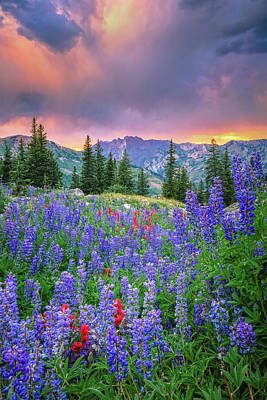 Frank Sinatra Rights Managed Images - Wasatch Lupine Royalty-Free Image by Johnny Adolphson