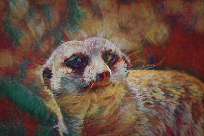 Rights Managed Images - Watchful Meerkat Royalty-Free Image by Ernie Echols