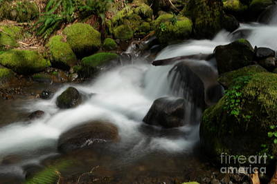 Moody Trees Rights Managed Images - Watching the flow Royalty-Free Image by Jeff Swan