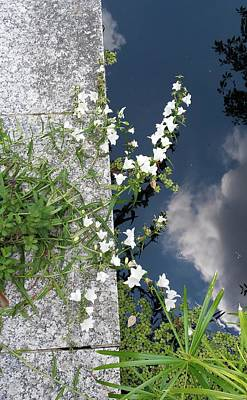 Thomas Kinkade - Water Blossoms by John Parry
