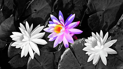 Photograph - Water lilies by Louis Dallara