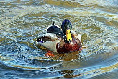 Marvelous Marble - Water Off A Ducks Back I by Debbie Oppermann