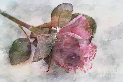 Fruits And Vegetables Still Life - Watercolour Rose by Lynn Bolt