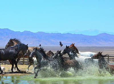 Photograph - Watering Hole by Barbara Sophia Travels