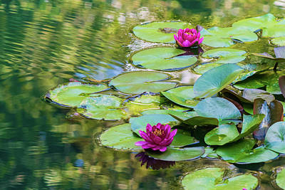 Grimm Fairy Tales Royalty Free Images - Waterlilies at Gibbs Gardens Royalty-Free Image by Mary Ann Artz
