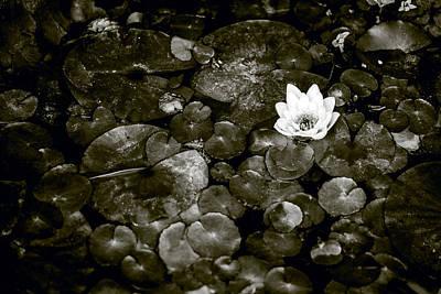 Photograph - Waterlily  by Janna Jensen