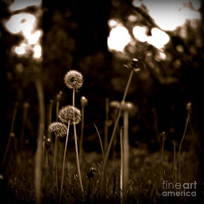 Frank J Casella Royalty-Free and Rights-Managed Images - Weeds by Frank J Casella