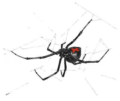 Black Widow Spiders Drawings Fine Art America