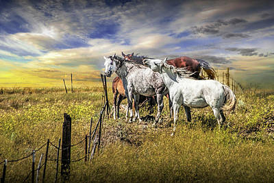 Black And White Flower Photography - Western Horses by the Pasture Fence under a Sunset Cloudy Sky by Randall Nyhof