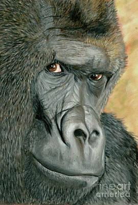 Mixed Media - Western Lowland Gorilla by Sheryl Elen