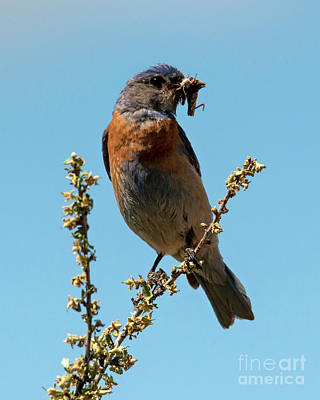 Royalty-Free and Rights-Managed Images - Western Male Breakfast by Mike Dawson