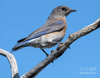 Royalty-Free and Rights-Managed Images - Western Perched by Mike Dawson