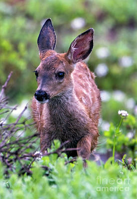 Mellow Yellow - Wet Fawn by Mike Dawson