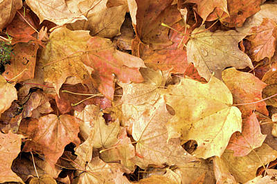 Photograph - Wet Leaves 2 by Valerie Kirkwood