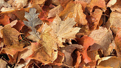 Photograph - Wet leaves with oak by Valerie Kirkwood