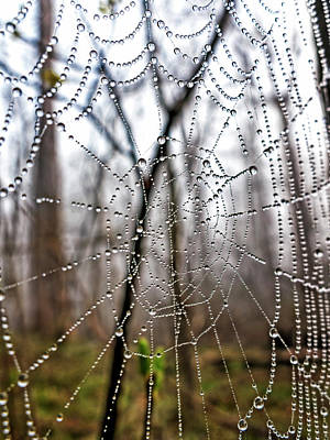 Fun Patterns - Wet Web by Francis Sullivan