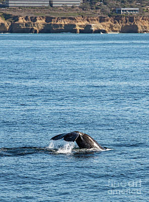 Photograph - Whale Tail by Debbie D Anthony