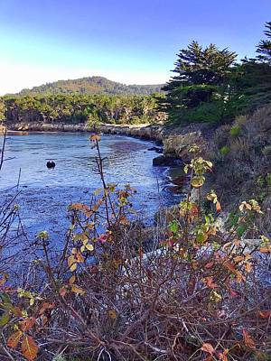 Royalty-Free and Rights-Managed Images - Whalers Cove Point Lobos by Luisa Millicent