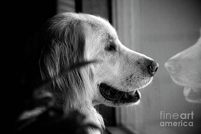 Frank J Casella Royalty-Free and Rights-Managed Images - What Dogs Teach Us by Frank J Casella