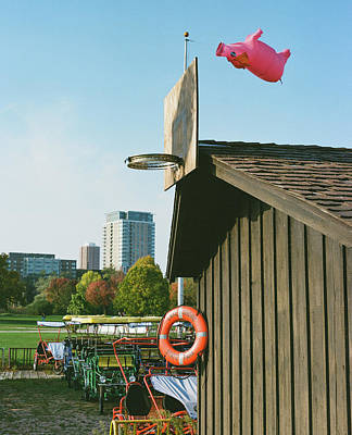 Photograph - When pigs fly upside-down by Vincent Buckley