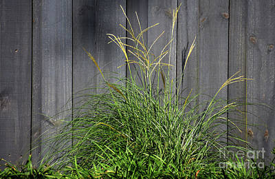 Target Threshold Nature - Where The Green Grasses Grow by Skip Willits