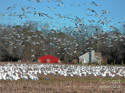 Birds Rights Managed Images - Wheres the Duck Blind? Royalty-Free Image by Scott Cameron