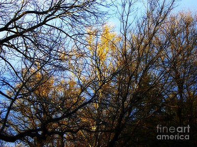 Frank J Casella Royalty-Free and Rights-Managed Images - White Bark Golden Hour Sunset by Frank J Casella