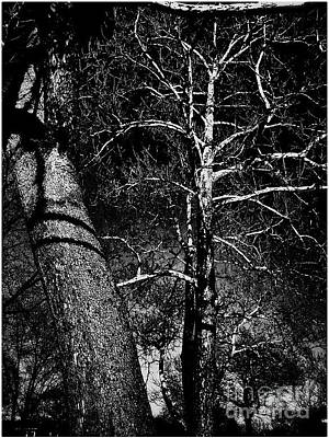 Frank J Casella Royalty-Free and Rights-Managed Images - White Branches on Black by Frank J Casella