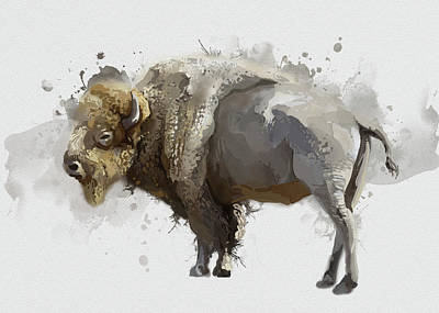 Everett Collection - White Buffalo Watercolor by Bekim M